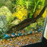 Fish - 20161003_161102.jpg