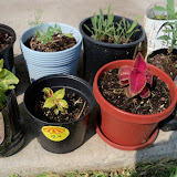Gardening 2010, Part Two - 101_3448.JPG