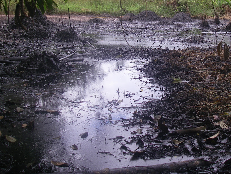 The impacts of an oil spill in Block 1-AB near the community of Nueva Jerusalem