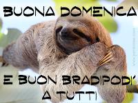 buona domenica buon bradipo di a tutti.png