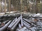 Dřevorubci!