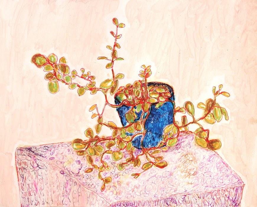 xerophyte, frank waaldijk