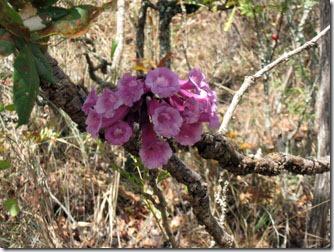 flores-silvestres-carrancas-4-