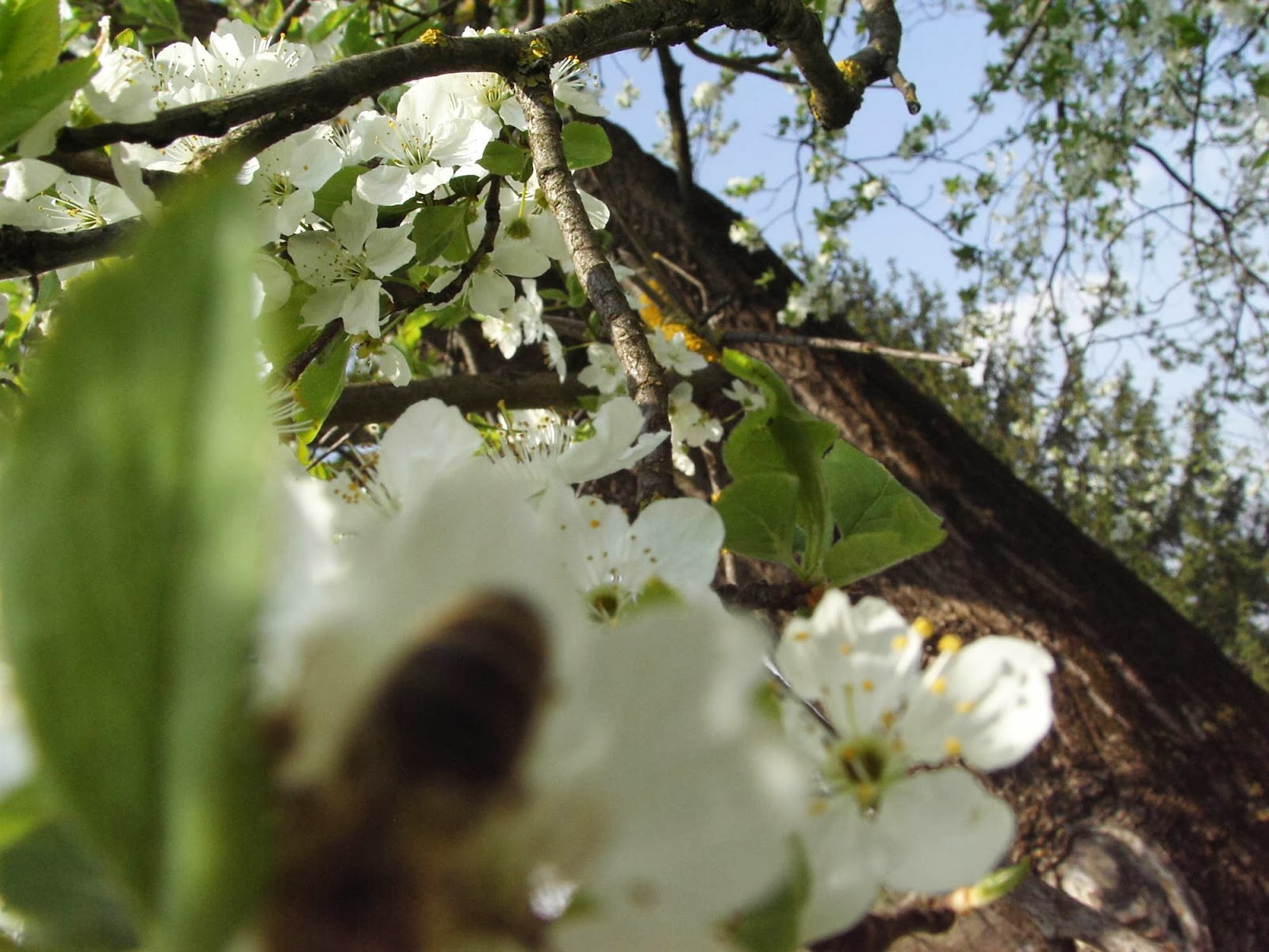 Zbiranje papirja, Ilirska Bistrica 2006 - KIF_8412.JPG