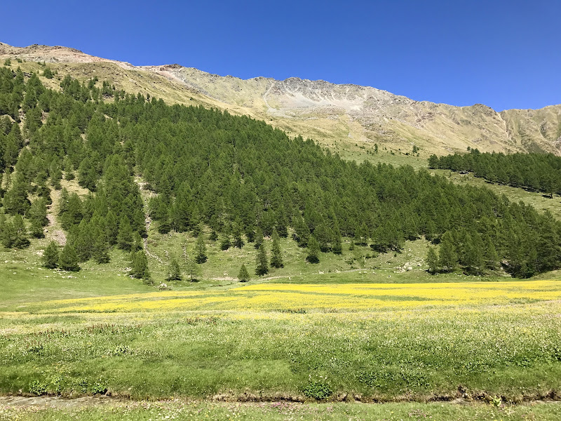 Sole a terra di debora_della_valle