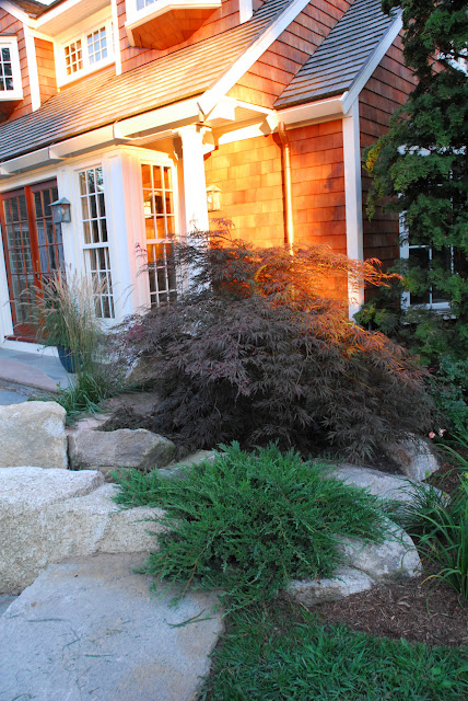 Japanese maple and rocks