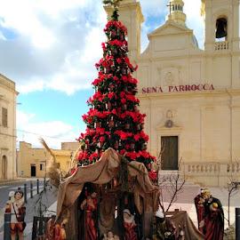 San Lorenz , Gozo.Malta by Ivor Evans - Public Holidays Christmas ( poinsattias., mediteranean. nativity, christmas, gozo )