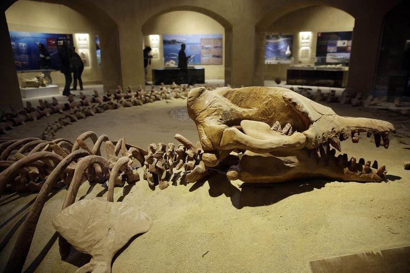 wadi-al-hitan-museum-3