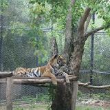 Zoo Snooze 2015 - IMG_7239.JPG