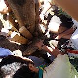 Campaments dEstiu 2010 a la Mola dAmunt - campamentsestiu043.jpg