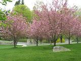 Spring Fling in Ridgefield