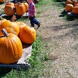 Pumpkin Patch - 115_8232.JPG