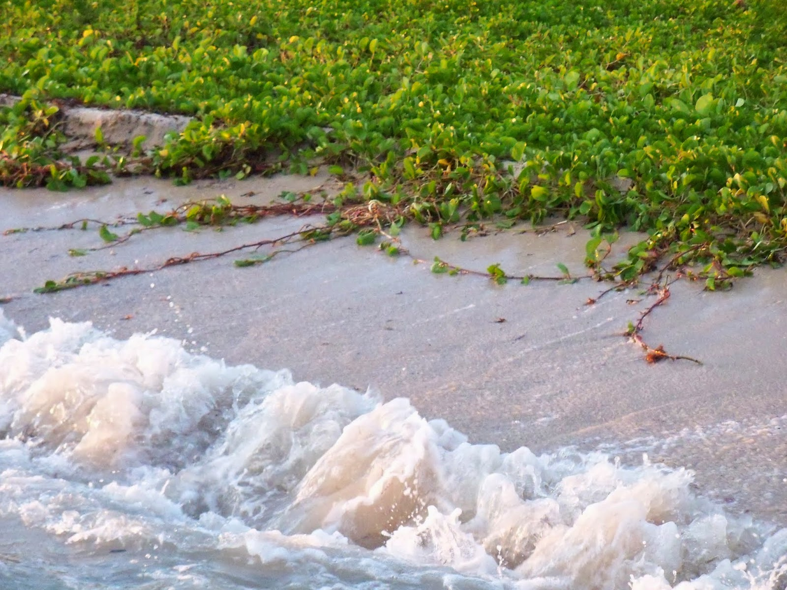 Key West Vacation - 116_5576.JPG