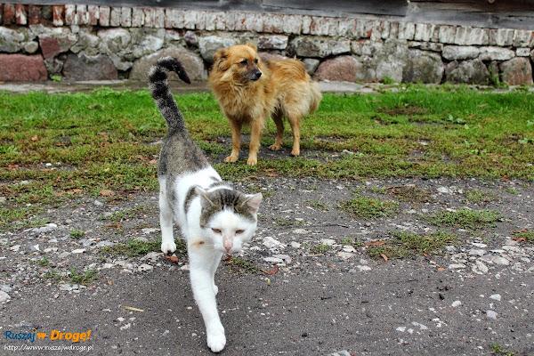 Mirowo lokalne zwierzaki