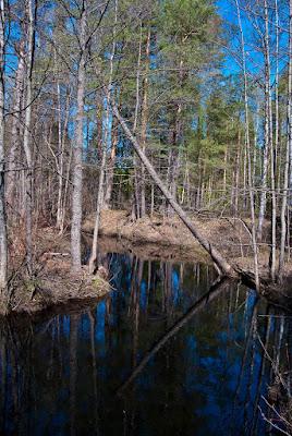 Лесная речка с глубокими омутами
