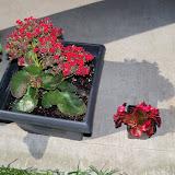 Gardening 2010 - 101_1334.JPG