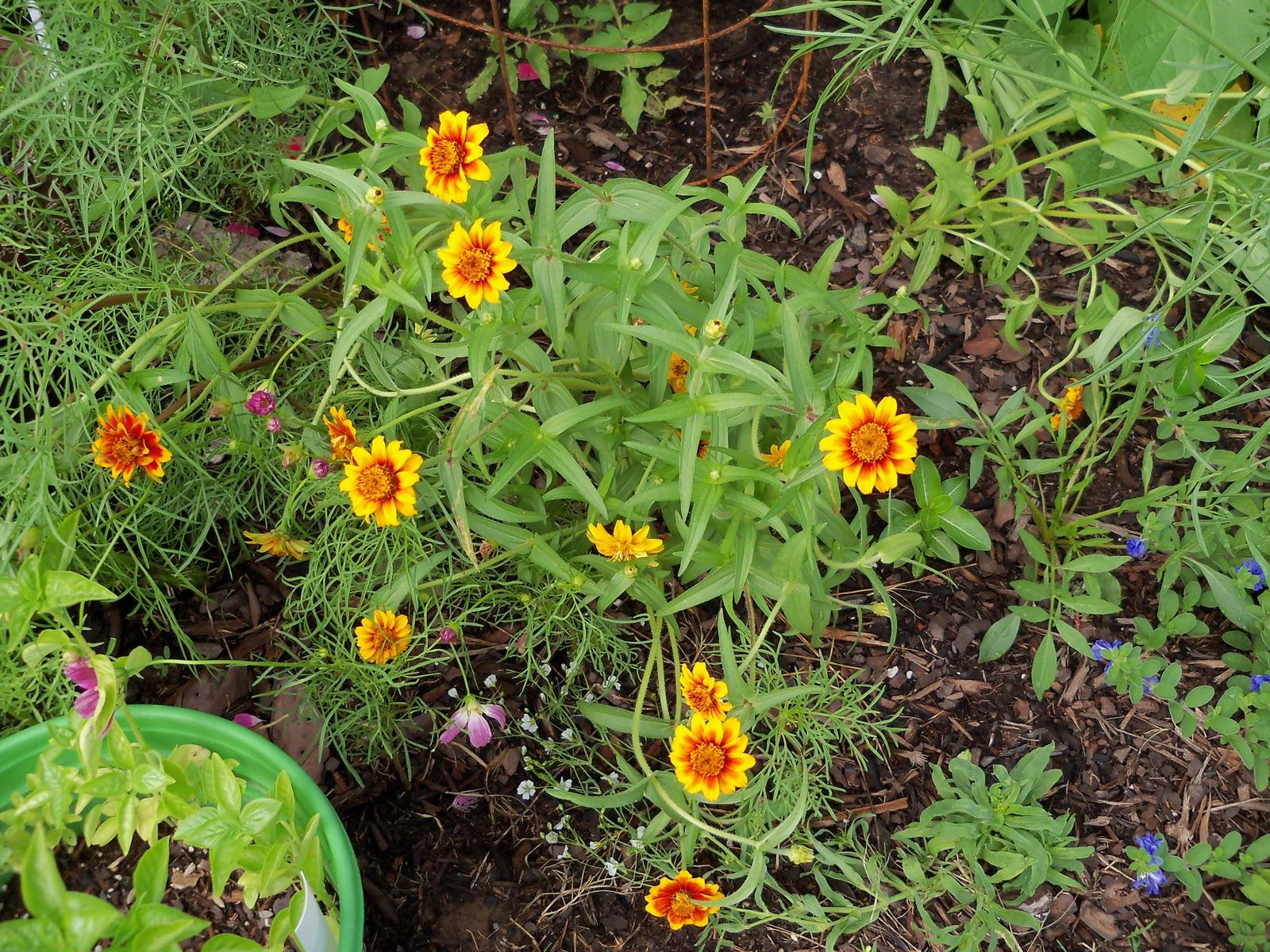 Gardening 2010, Part Three - 101_3614.JPG