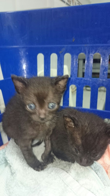 Gatito busca hogar en Luyando (Alava) IMG-20150912-WA0020