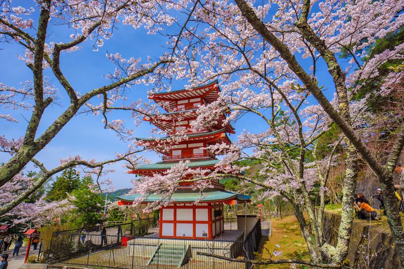 新倉富士浅間神社 桜 写真10