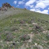 Biotope de Zygaena (A.) magdiana, Polyommatus persephatta minuta GRUM-GRISHMAÏLO, 1890, et eumedon ESPER, 1780. Hissar Mts, Anzob Pass, 3430 m, 28.VII.2009, Tadjikistan. Photo : J.-F. Charmeux