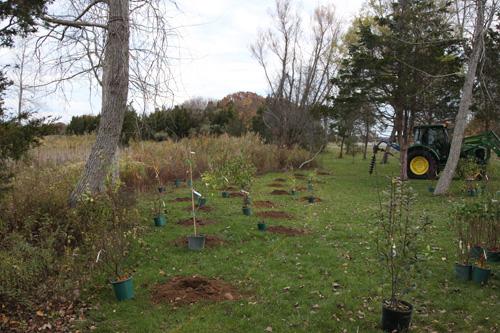 Hammo Fall Planting - Jim Murtagh - BC3G2517.jpg
