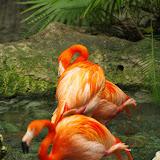 03-11-15 Dallas World Aquarium - _IMG1029.JPG