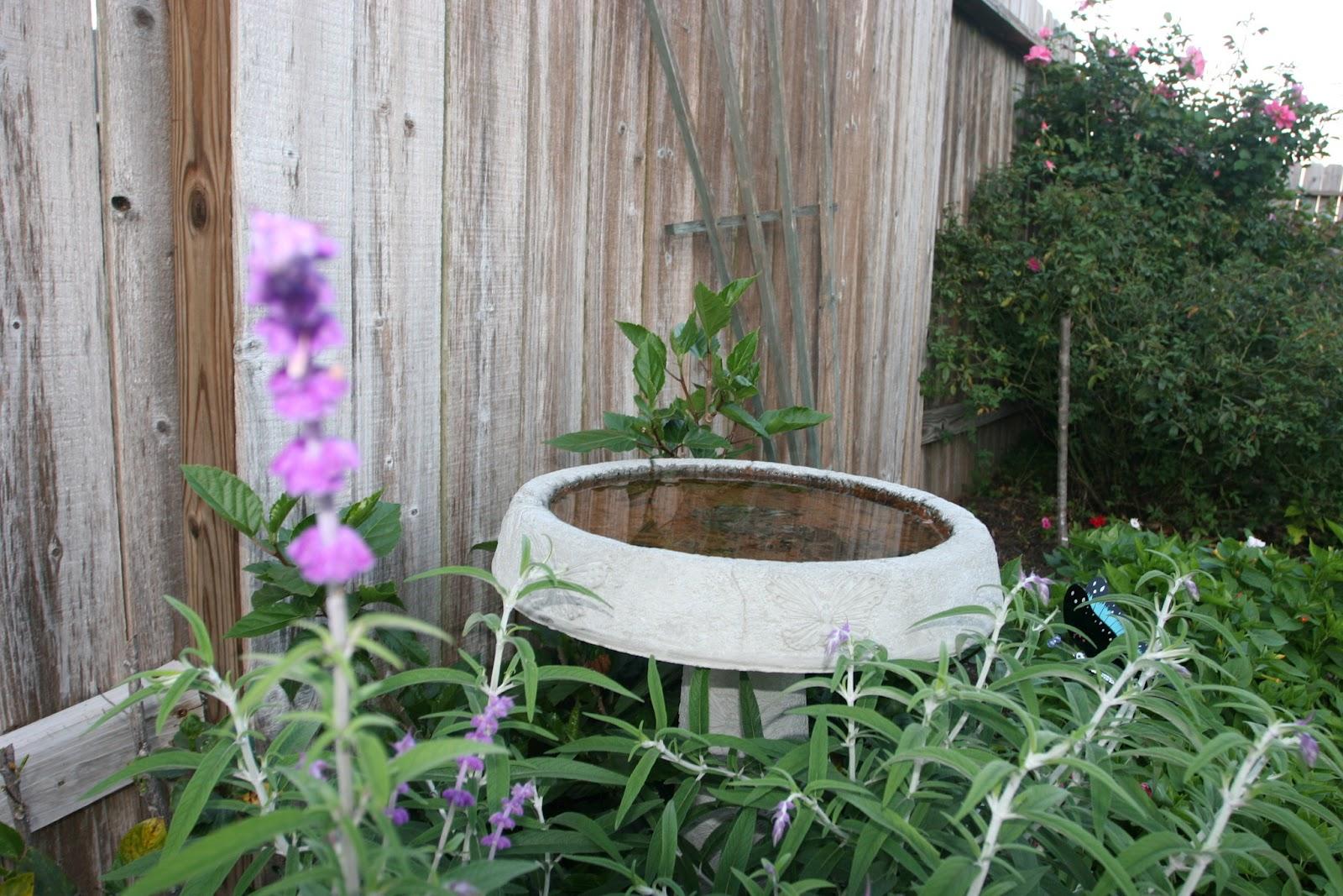 Gardening 2012 - IMG_2711.JPG