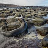 galapagos - Galapagos_FB-48.jpg