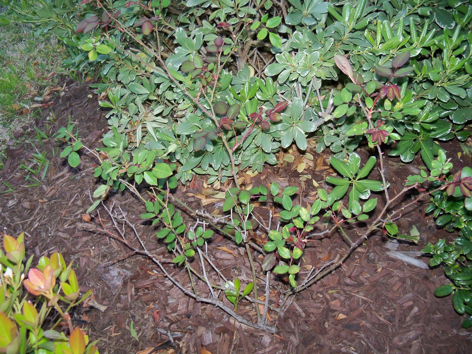 Gardening 2010 - 101_0335.JPG