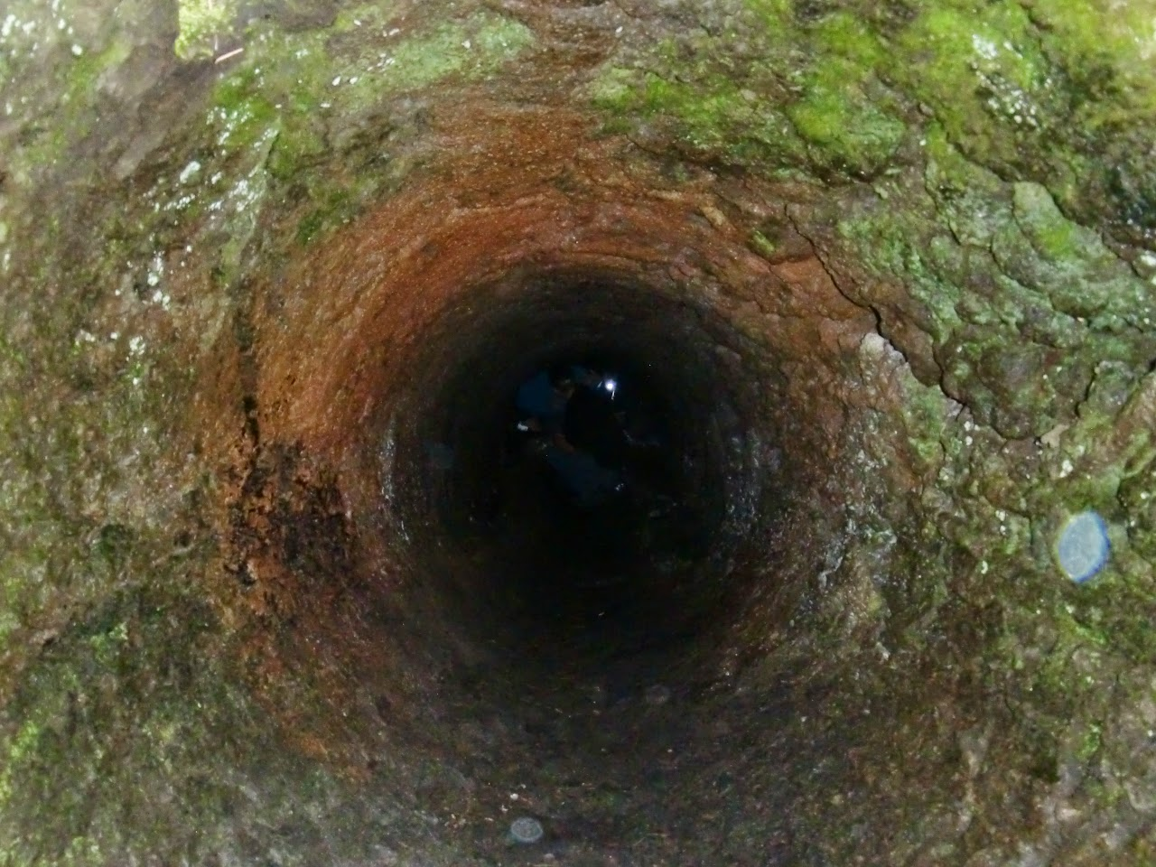 Tree tunnel at the Trail of Two Forests