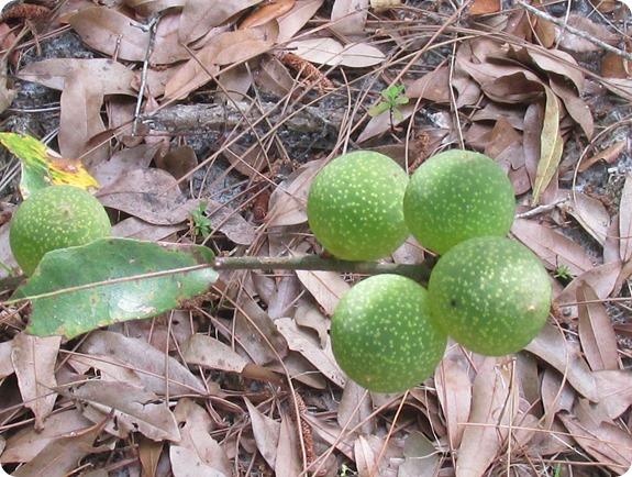Hampton Tract -  Plant Fruit (1)