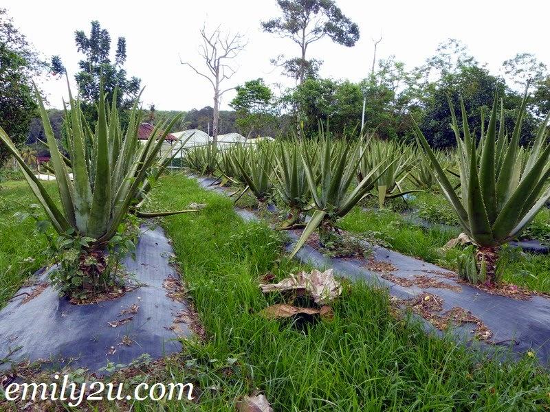 Titi Eco Farm Resort