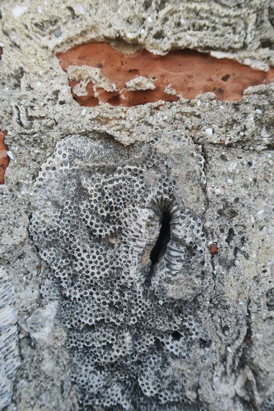 Limestone Brick and Coral