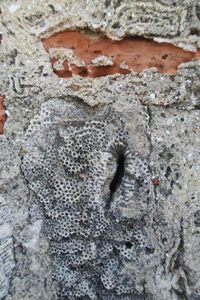Limestone Brick and Coral