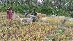 Koordinasi Giat   Memasang Jaring di Sawah