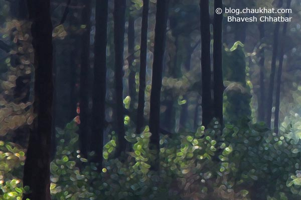 Misty scene of trees and a winding walkway in greenery - Crop 3
