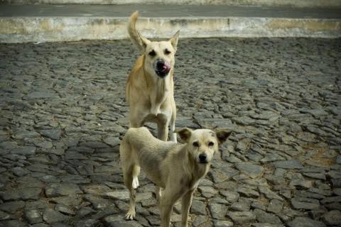 Cómo se dice perro en El Salvador