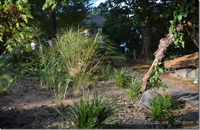 Ein paar der neuen Gräser für den Garten sind schon gepflanzt.