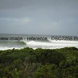 _DSC7256.thumb.jpg