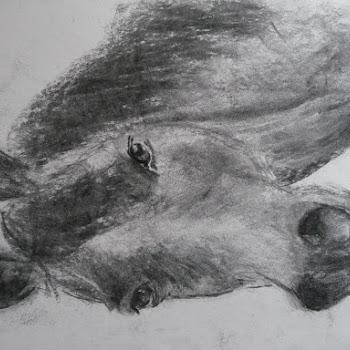 Kop van een dier in houtskool