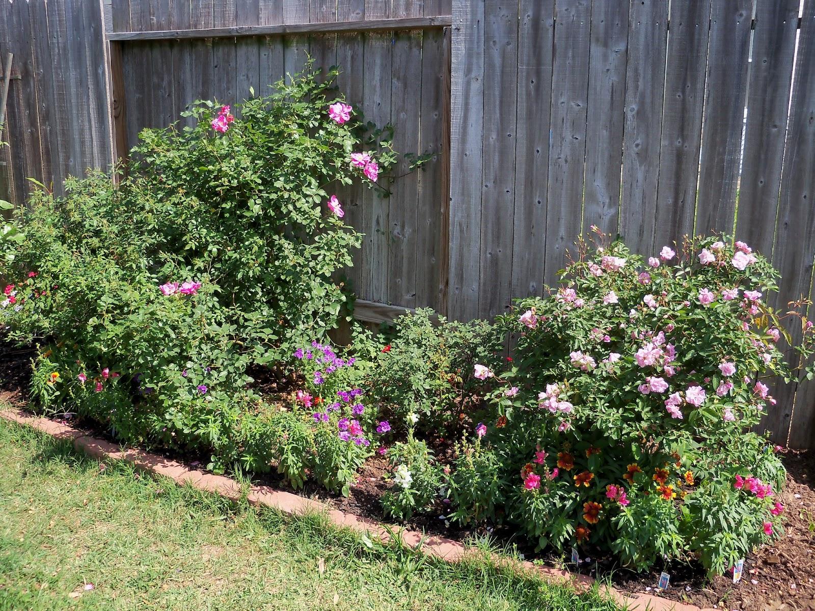 Gardening 2011 - 100_7682.JPG