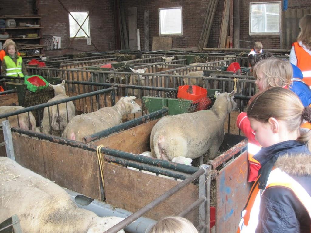 Welpen - Naar de boerderij - IMG_5486.JPG