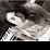 קרן ברקוביץ's profile photo