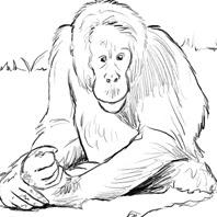 Pulang the Orangutan