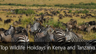 Top 5 Wildlife Holidays in Kenya and Tanzania