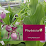 Phytesia Orchids - Hardy Orchids for your Garden's profile photo