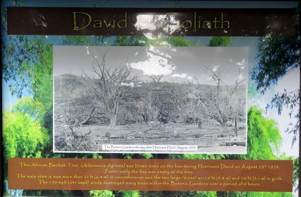 BG Hurricane David Devastation