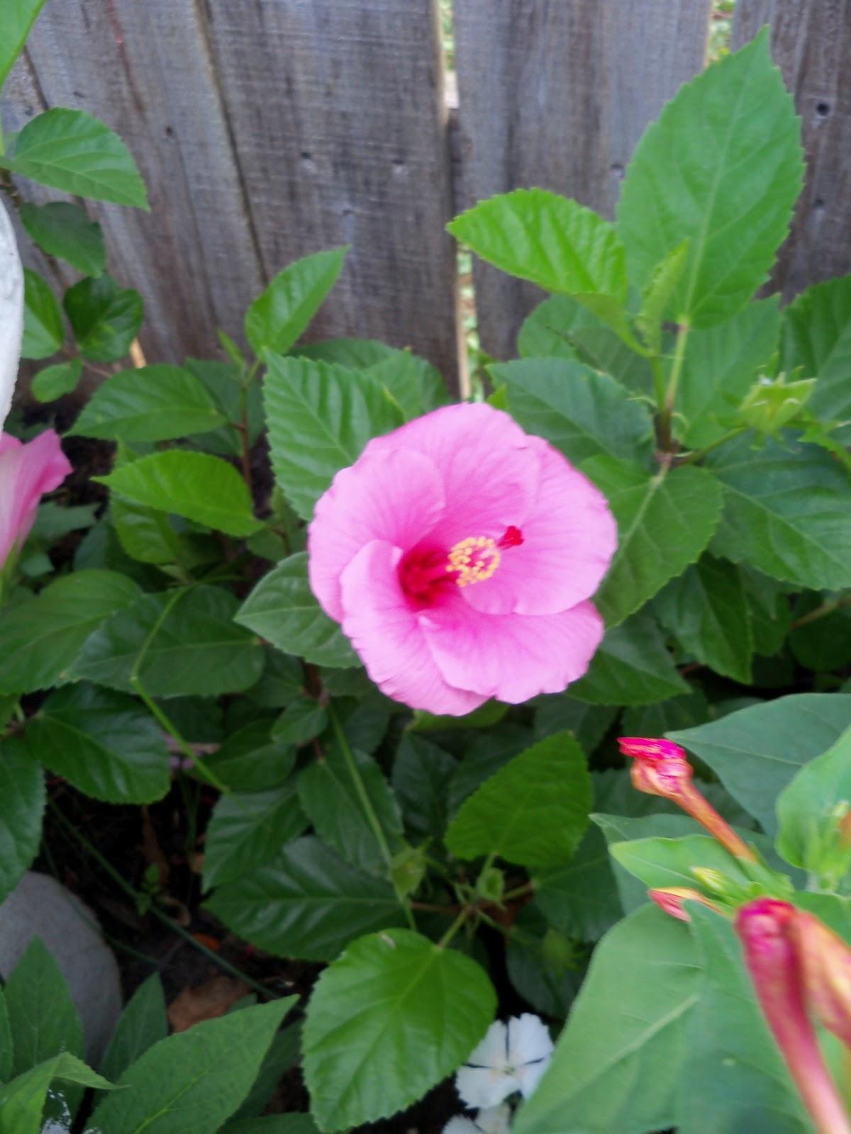 Gardening 2011 - 100_8184.JPG