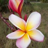 Hawaii Day 6 - 100_7637.JPG