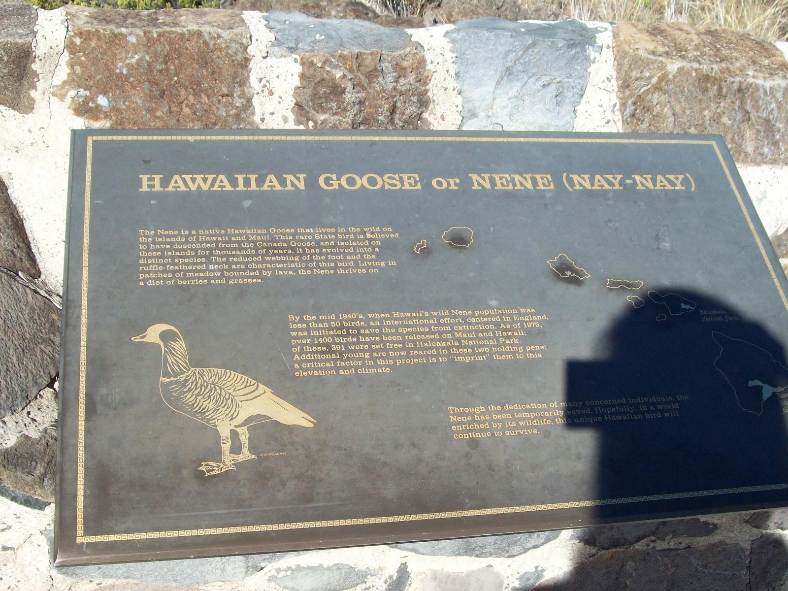Hawaii Day 8 - 114_2037.JPG